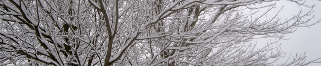 snow_tree_650a